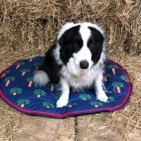 V770 Waterproof Dog Cushion