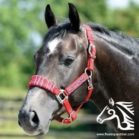Candy Stripe Headcollar