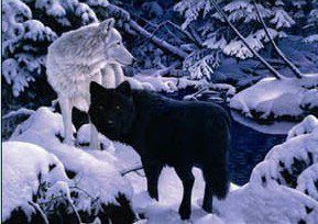 56 Black & White Snow Wolf.jpg