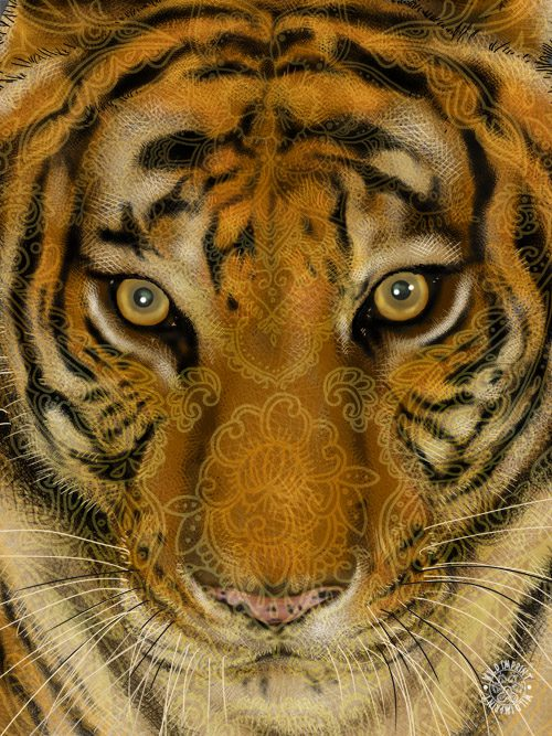 Tiger_Picture_layout-2.jpg
